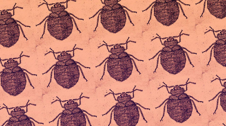 Come prevenire e riconoscere le infestazioni delle cimici dei letti?
